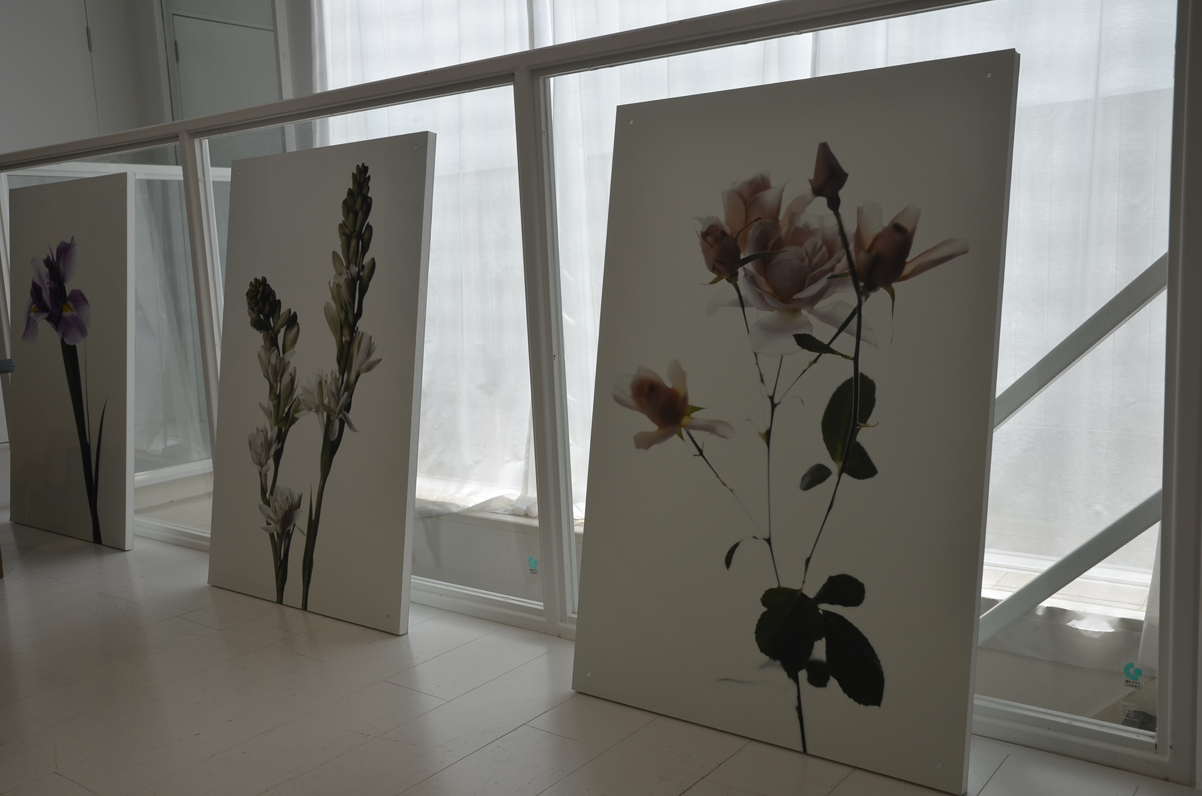 展示会場にも飾られた、シーズンテーマを表現する花の写真も「ランジェリーク」のための撮りおろし